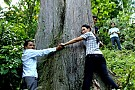 Thảm thương phận 'cây ướp xác' khổng lồ ở Tây Côn Lĩnh - Kỳ 1