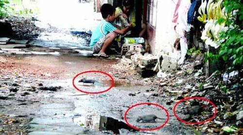 Thuốc diệt chuột  các loại  ,hàng nhập khẩu 100% - 4