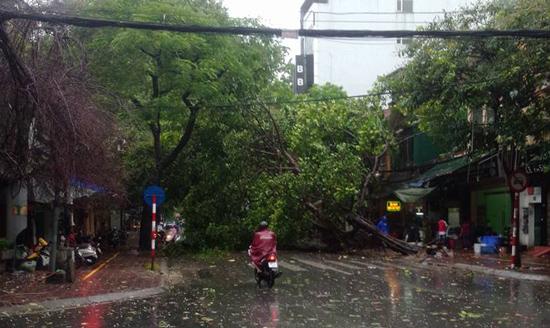Bão quét tới Hà Nội: Gió giật mạnh, cây cối, xe máy đổ hàng loạt