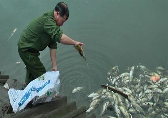 Bục đường ống nước thải là nguyên nhân làm cá chết hàng loạt tại Bảo Thắng