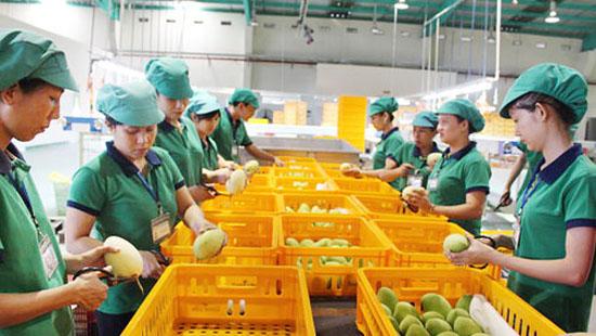 Cảnh báo 13 DN nhập khẩu trái cây UAE lừa đảo